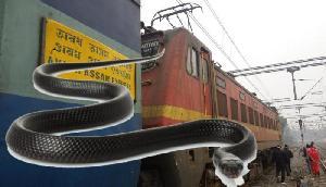 इस Train  में 51 किलोमीटर तक लोगों ने किया काले नाग के साथ सफर, अटकी सांसे