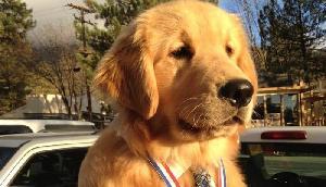 इस शहर में एक कुत्ते को बनाया गया मेयर, सोशल मीडिया पर भी है एक्टिव