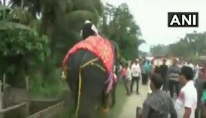 जब नेताजी को भारी पड़ी हाथी की सवारी, उनका हो गया बुरा हाल, देखें ये वायरल वीडियो