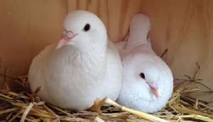 इंसान ही नहीं Birds  को भी खिलाई जा रही है गर्भनिरोधक गोलियां, सच्चाई उड़ा देगी होश