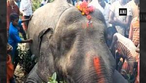 प्रशासन की लापरवाही से दर्दनाक हादसा, बिजली की हाईवॉल्टेज तारों की चपेट में आए हाथी की मौत