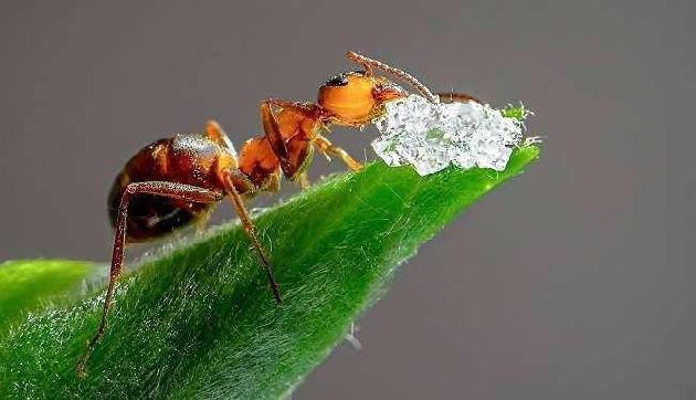 चींटी ने चोरी की ऐसी चीज कि मिनटों में करोड़पति बन गया ये शख्स!