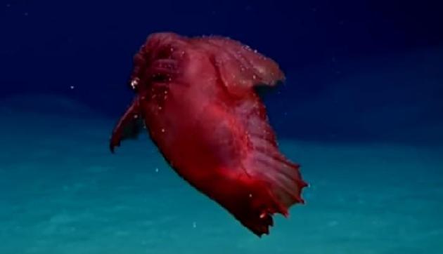 ये हैं दुनिया के सबसे विचित्र जीव, देखकर रह जाएंगे हैरान