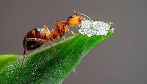चींटी ने चोरी कर ली ऐसी चीज, जिससे मिनटों में बन गया करोड़पति !