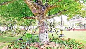 यहां जंजीरो से बाधंकर रखा गया है एक पेड़, देश का नाम सुनकर उड़ जाएंगे होश