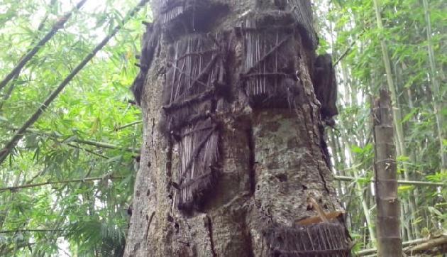 यहां बच्चों के शव को जमीन में नहीं, पेड़ों में दफनाते हैं सदस्य