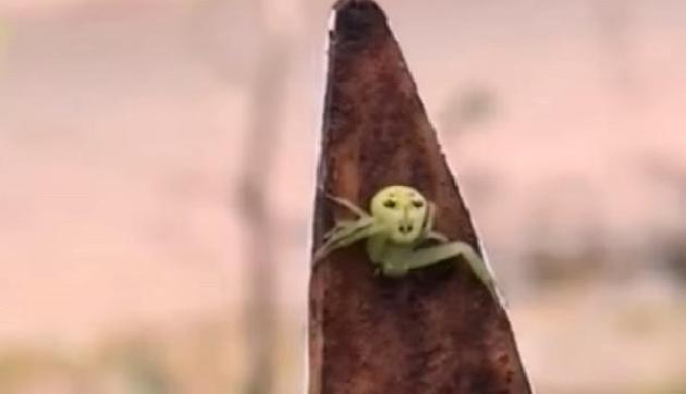असम में दिखी इंसानी चेहरे वाली अनोखी मकड़ी, लोगों में मचा हड़कंप