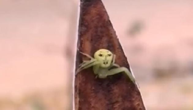 अद्भुत! चेहरा इंसानों जैसा, शरीर मकड़ी जैसा, असम में दिखा है ये अजीब जीव
