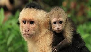 बंदर को मारकर खाने में केस दर्ज, जानिए पूरा वाकया