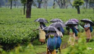 त्रिपुरा की चाय को देश-विदेश में मिली नर्इ पहचान, बना ब्रांड नाम और लोगो