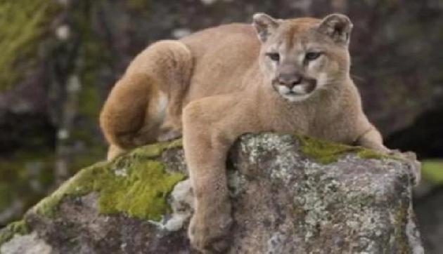 जब पार्क में युवक का हुआ शेर से सामना, बिना डरे किया मुकाबला, शेर को ही मार दिया