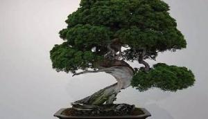 400 साल पुराना 64 लाख रुपए का पेड़ हुआ चोरी