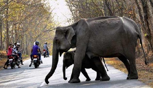 हाथियों के पैरों के बीच आ गिरी 4 साल की बच्ची, फिर जो हुआ जानकर उड़ जाएंगे होश