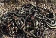 बैग में 20 जिंदा सांप को लेकर सफर कर रहा था युवक, सच्चाई उड़ा देगी होश