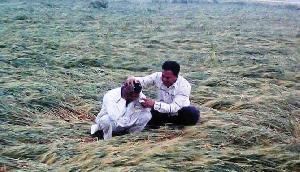इस राज्य में एक झटके में किसानों की 18 करोड़ की फसल हुई बर्बाद, जानिए कैसे