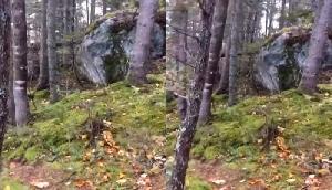 सचमुच सांस लेता है ये जंगल! देखें तस्वीरें