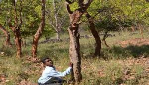 आखिर पेड़ों पर क्यों बनाई जाती हैं सफेद और लाल रंग की पट्टियां? इसके पीछे हैं कई वैज्ञानिक कारण