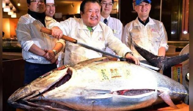 ये है दुनिया की सबसे महंगी मछली, कीमत जानकर उड़ जाएंगे होश