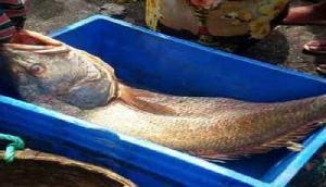 एक मछली ने रातोंरात दो भाइयों को बना दिया लखपति, सच्चाई उड़ा देगी होश