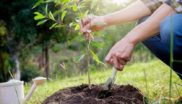 पति की मौत के बाद पत्नी ने लगाए 73,000 पौधे, जानिए क्या है वजह