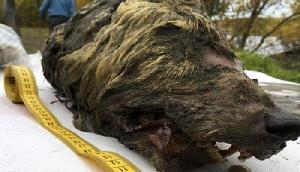 मिला 40,000 साल पुराने जानवर का सिर, सच्चाई उड़ा देगी होश