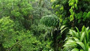 इस जंगल में नहीं पहुंचती है सूर्य की रोशनी, अबतक नहीं सुलझ पाया ये रहस्य