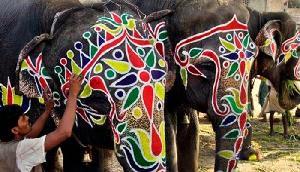 पीएम मोदी के गुजरात में हाथियों को भेजने पर घिर रही है भाजपा, अब हुआ ऐसा काम