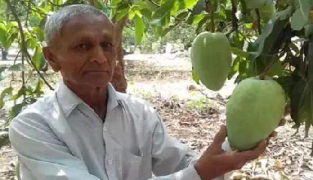 ये है 'आमों की मलिका', एक आम की कीमत 12 सौ रुपए