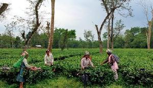 चाय उद्योग को ऊंचाई पर पहुंचाने के लिए मुख्यमंत्री ने उठाया महत्वपूर्ण कदम