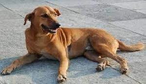 एक आदमी ने अपने ही पड़ोसी के कुत्ते को पहले चुराया और पका कर खा गया