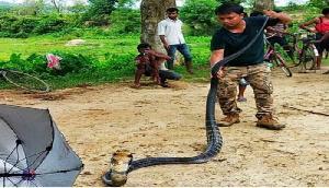 बारिश होते ही निकला 14 फुट का भंयकर कोबरा सांप, गांव वालों के छूटे पसीने