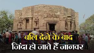 इस मंदिर में बलि देने के बाद फिर जिंदा हो जाते हैं जानवर, रहस्यमयी सच्चाई!