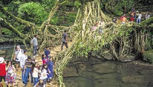 नदी में आया भयंकर उफान, 100 साल पुराने लिविंग ब्रिज खतरे में