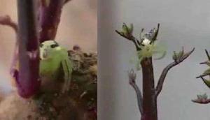 इंसानों जैसा है मकड़ी का चेहरा, लोग कह रहे हैं ऐसा, वीडियो वायरल