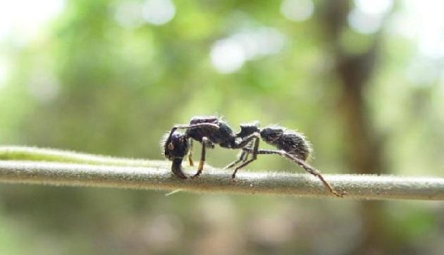 जानिए क्यों चींटी चलती है लाईन में, कारण जानकर हैरान रह जाएंगे आप