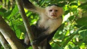 पेड़ के नीचे बैठे लोगों पर बंदर ने पेशाब कर बचाई जान, सच्चाई जानकर रह जाएंगे दंग