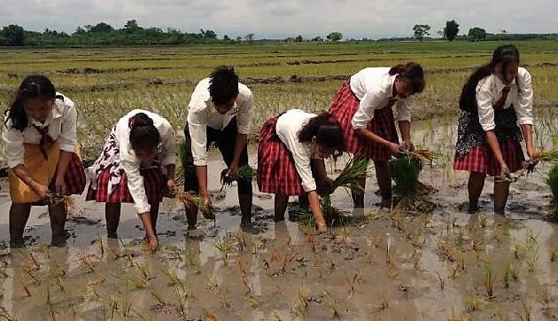 असम में पहली बार हुआ ऐसा, इस कॉलेज ने शुरू की खेती की प्रेक्टिकल पढ़ाई
