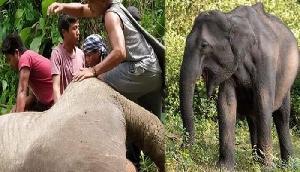 सांप, और कुतों के बाद अब हाथी का मांस खा रहे यहां के लोग, सामने आई नई घटना