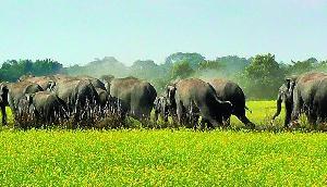 किसानों ने पेश की ऐतिहासिक मिसाल! हाथियों का चारा उगाने के लिए दान कर दी जमीन