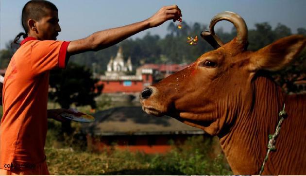 इस गाय के दूध से दूर हो रही हैं कैंसर जैसी बिमारियां, 5 लाख तक देने को तैयार लोग