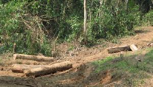 NGT ने इस भाजपा शासित राज्य को दिया निर्देश, पेड़ काटने वालों पर करें कार्रवाई
