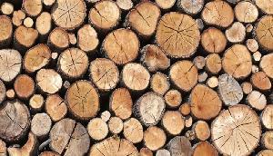 देश का पहला पर्वतीय राज्य जहां ई-ऑक्शन से बिकेगी लकड़ी, अभी इन राज्यों नहीं शुरू हुई ऐसी सुविधा