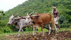 PM मोदी की किसान मानधन योजना लागू, इस राज्य से सिर्फ 1 किसान ने किया आवेदन