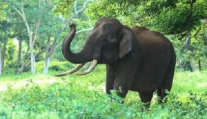 हाथियों से परेशान किसानों ने लगाई खेत के पास मूर्ति, गणेशजी से की ऐसी मांग