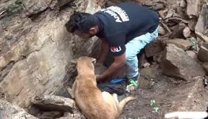 इस तरह कुत्ते ने बचाई अपने दो बच्चों की जान , जानकर हैरान हो जाएंगे आप
