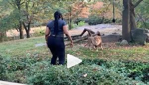 चिड़ियाघर में शेर के घेरे में कूदकर महिला ने किया Dance, वीडियो देख उड़ा जाएंगे होश