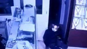 गजब! Showroom में बिल्लियों ने डाली डकैती, उड़ा ले गई 13 करोड़ रूपये के गहने