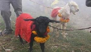 525 सालों में पहली बार इस मंदिर में नहीं दी जाएगी पशु बलि, HC ने सुनाया था फरमान