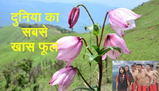 भारत के इस फूल के दिवाने हैं लोग, पूरी दुनिया से देखने आते हैं लोग