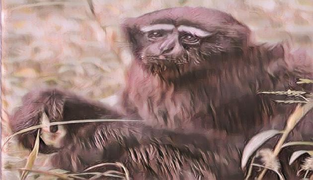 Zoo के इस Hero की हो गई है मौत, इन राज्यों को सता रहा इस प्रजाति के खत्म होने का डर